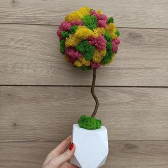 Топіарій з моху, дерево з моху, весняний декор, подарок до 8 березня
