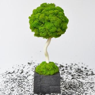 Еко-дерево, топиарий зі стабілізованого моху в чорному бетонному кашпо, 30 cm