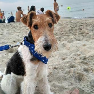 Ошейники для собак с банданой или бантом