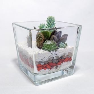 """Композиция из суккулентов в стеклянном флорариуме """"куб"""""""