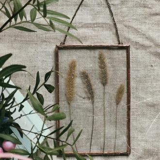 Декор на стінку з гербарієм