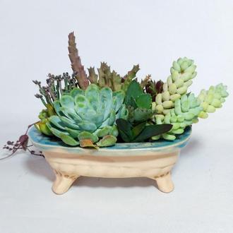Суккуленты в керамической ванночке