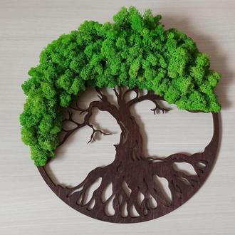 Дерево жизни со стабилизированным мхом