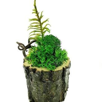 Стабилизированный мох пенёк Reindeer Moss s21/001/01/500 зеленый