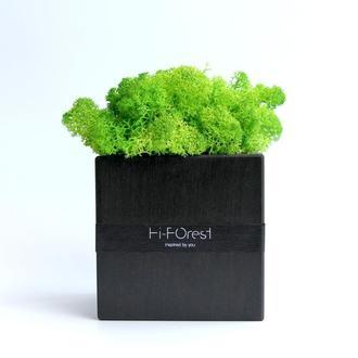Эко-декор со скандинавским мхом Hi-Forest Cube для дома и офиса. 9х9 см. Подарочная упаковка.