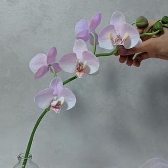 орхидея фаленопсис cinders