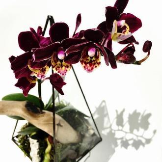 Флорариум тропический геометрический с мини орхидеей