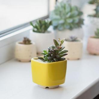 Керамический горшок для кактусов 6,4х6,5см Квадратный Яркий Желтый