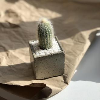 Миниатюрные растения в бетонном горшочке