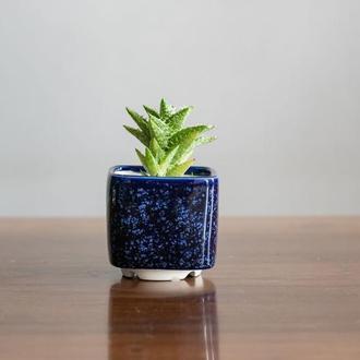 Керамический горшок для кактусов 6,4х6,5см Квадратный Клеопатра