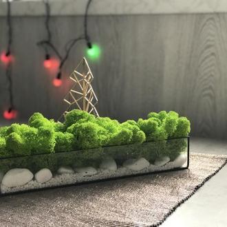 Кашпо зі стабілізованим мохом + камінці  (Моссаріум, Флораріум, Тераріум)