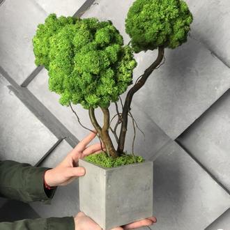Дерево, топіарій з зеленого моху. Трьохствольний бонсай з моху. Декор з моху. Виріб з моху