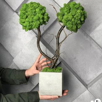 Дерево, топиарий из стабилизированного мха. Двуствольный бонсай из зеленого мха. Декор из мха