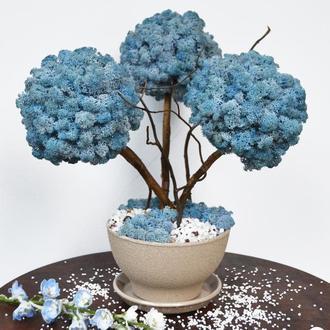 Дерево, топиарий из стабилизированного мха, трехствольное, голубое