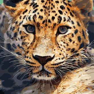 Погляд леопарда, 40х50 (AS0739)