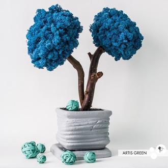 Дерево, топіари з стабілізованого моху Marine