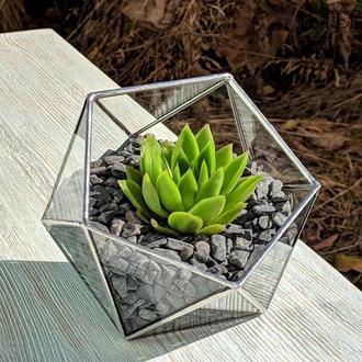 Флорариум №7 micro silver + набор для посадки композиций из суккулентов, кактусов