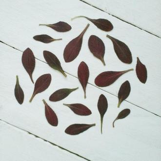 Листья натуральные сухие.