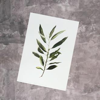 Принт Elaeagnus