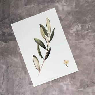 Принт Olive