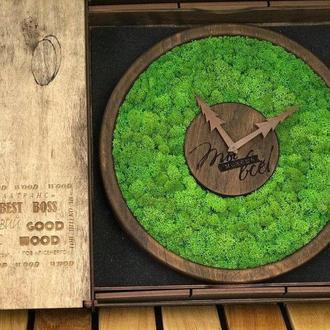 Часы со мхом, стабилизированный мох 20 см