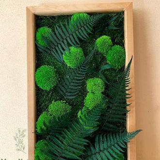 Картина з моху стабілізованого