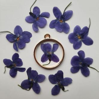 Синяя (фиолетовая) лесная фиалка.