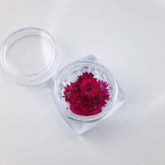 Малиновые цветы в баночке, 9-10 шт.