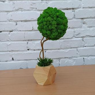 Топіарій з моху, дерево з моху