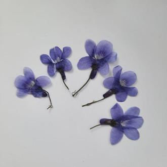 Светлая фиолетовая лесная фиалка.