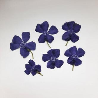 Открытый цветок, фиолетовый барвинок, поштучно.