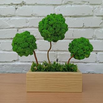 Композиція зі стабілізованих дерев, дерев з моху