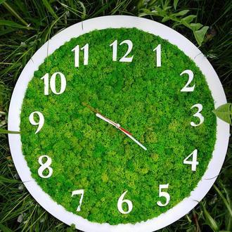 Настінний годинник з стабілізованим мохом