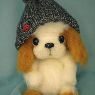 Собачка в шапочке