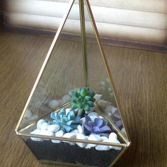 Флорариум-пирамида из суккулентов