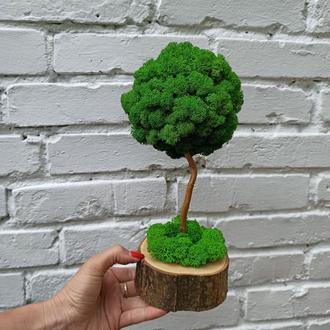 Стабілізоване дерево, дерево з моху. Топіарій з моху