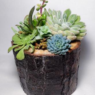 Флорариум в деревянном пеньке