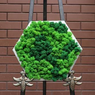 """Картина зі стабілізованим мохом """"Зелені соти"""""""