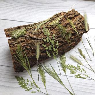 Сухоцветы для эпоксидной смолы. Гербарий. Полевые травы