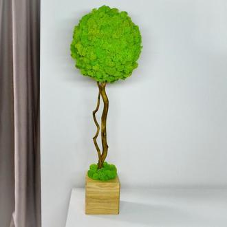 Дерево из стабилизированного мха Топиарий. Дерево счастья.