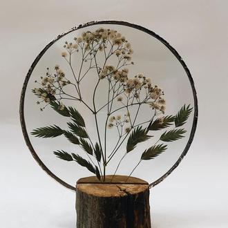 Рамка с гербарием