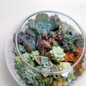 Флорариум с композицией из суккулентов в стеклянном шаре