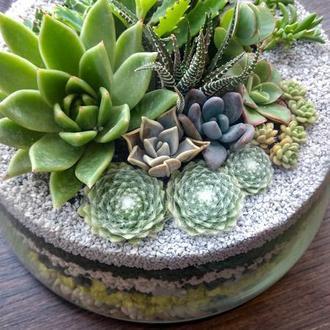 Флорариум с композицией из суккулентов