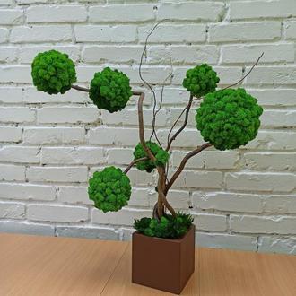 Дерево з моху, стабілізоване дерево, топіарій з моху