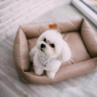 Лежанка для собак и котов Basic