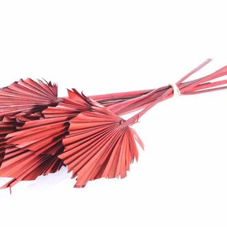 Пальмовый лист копье красный 10 шт