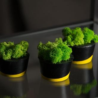 """Набір кашпо з мохом """"Чорна пастель"""", жовтий (3 штуки)"""
