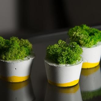 """Набір кашпо з мохом """"Біла пастель"""", жовтий (3 штуки)"""