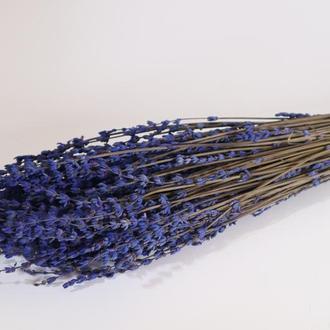 Лаванда стабилизированная пурпурная