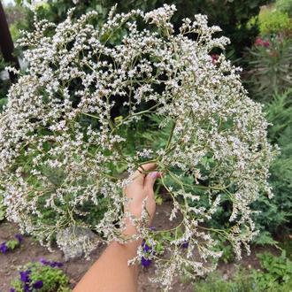 Сухоцветы для флористики, мыла, свечей. Кермек татарский. 1 ветка